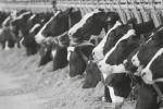 Farm Veterinary Services - Dairy