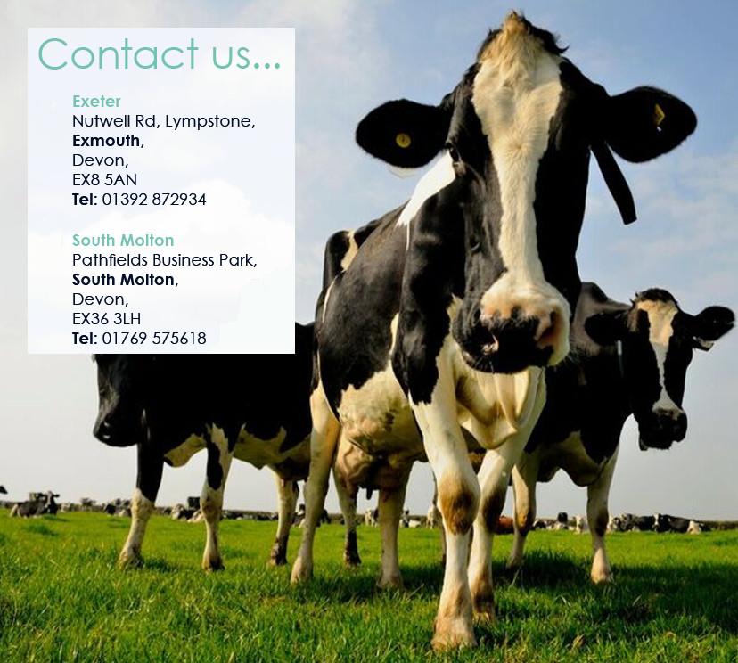 contact-website