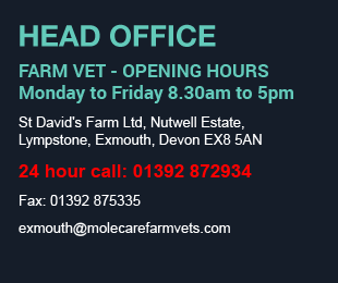 Molecare Veterinary Services Exmouth