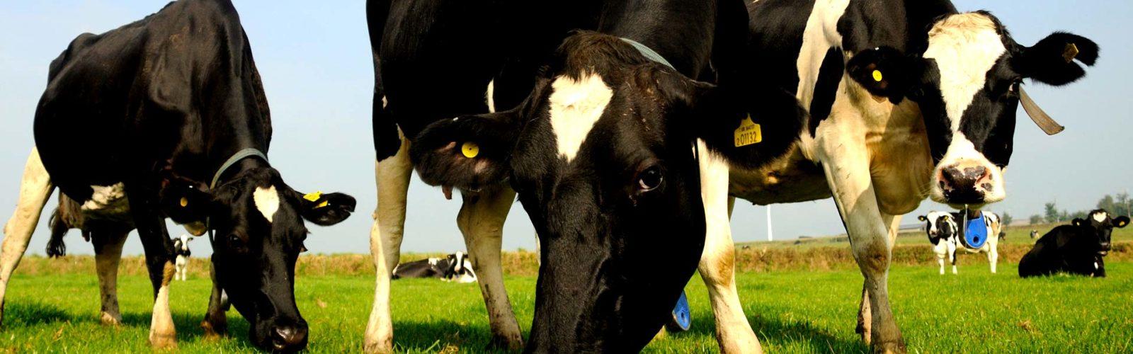 Molecare Farm Dairy Vets